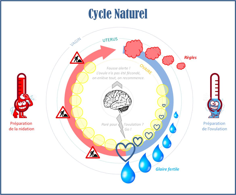 explication cycle menstruel