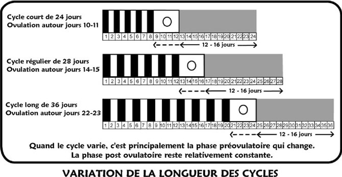calendrier ovulation cycle irrégulier